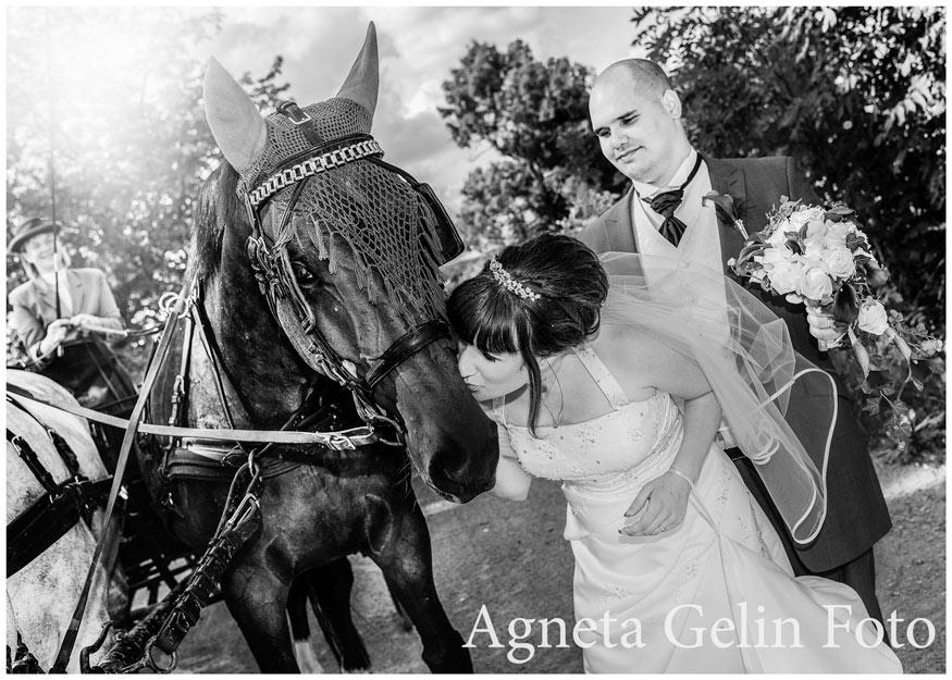 Bröllopmedhästochvagn