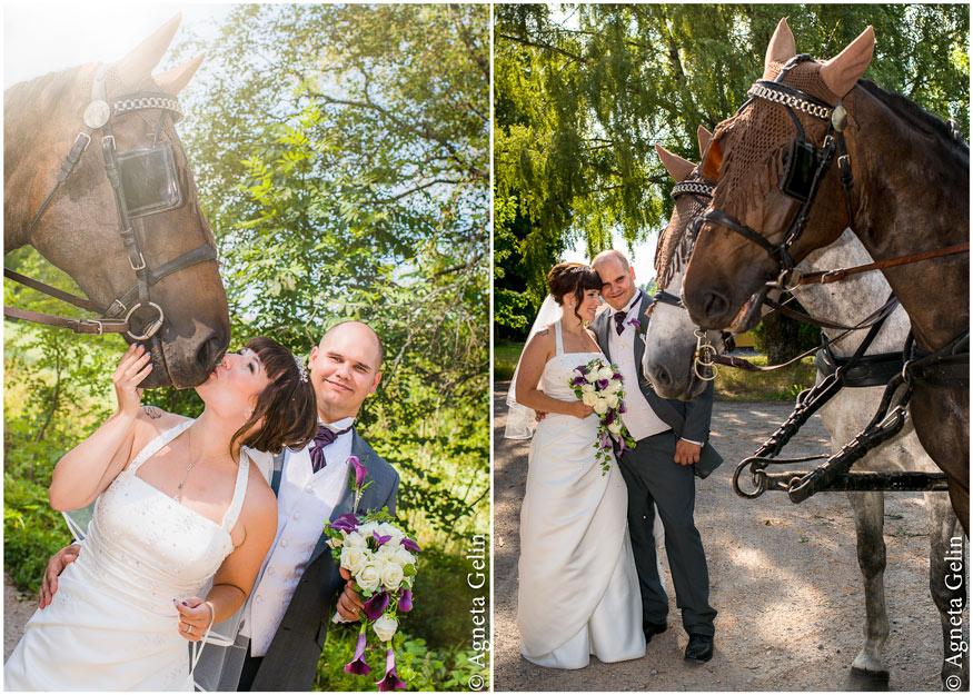 horseandcarriage-fotografagnetagelin
